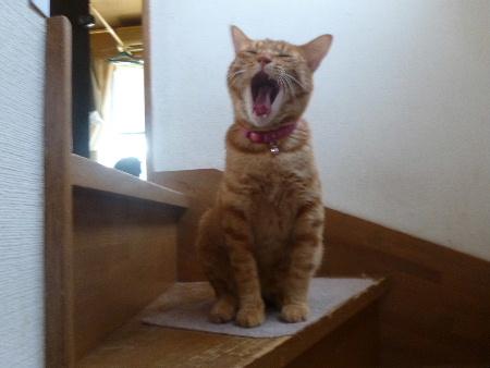 yawn-2.JPG